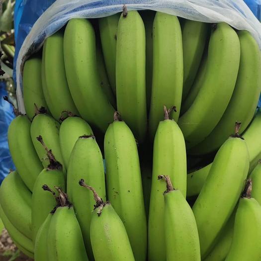 湛江 香蕉 够靓 无黑点,无水雾 都是从蕉农那拿. 打