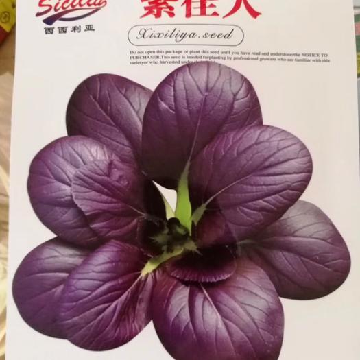 商丘夏邑县 紫佳人 紫油菜种子 丰产稳产