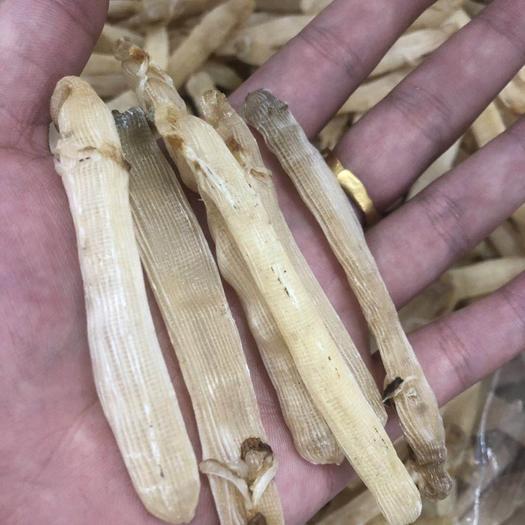 钦州钦南区沙虫 价格个图片相对的,按顺序。