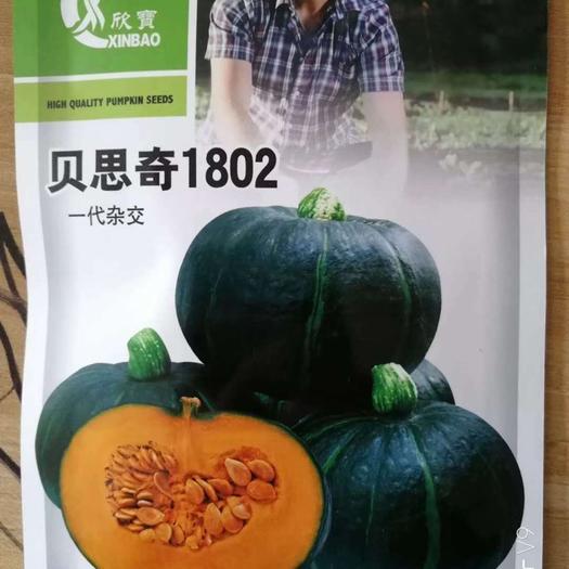 郑州 【精选】日本进口 迷你贝贝南瓜种子 重一斤左右 口感粉糯甜