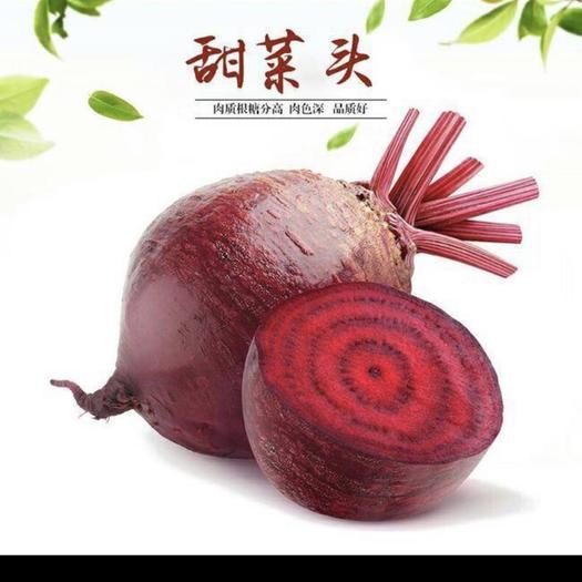徐州沛县 甜菜。通货
