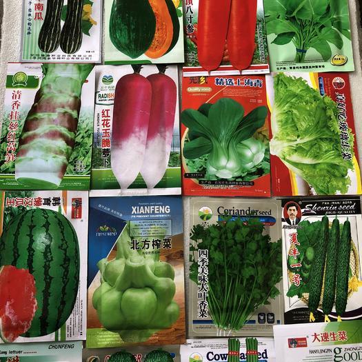 邯郸丛台区急性子种苗 各种蔬菜种子