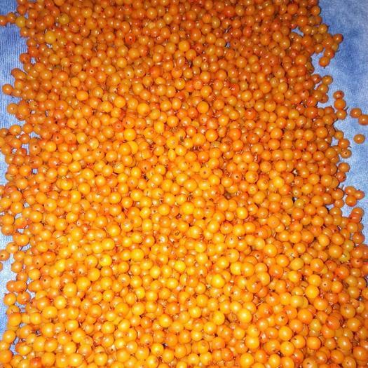 漳县 沙棘果枝、沙棘鲜果