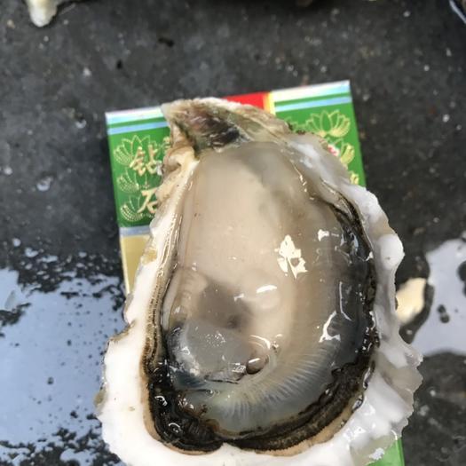 潮州饶平县 全壳生蚝鲜活带壳生蚝肉牡蛎海鲜海蛎烧烤大蚝50粒广东包邮