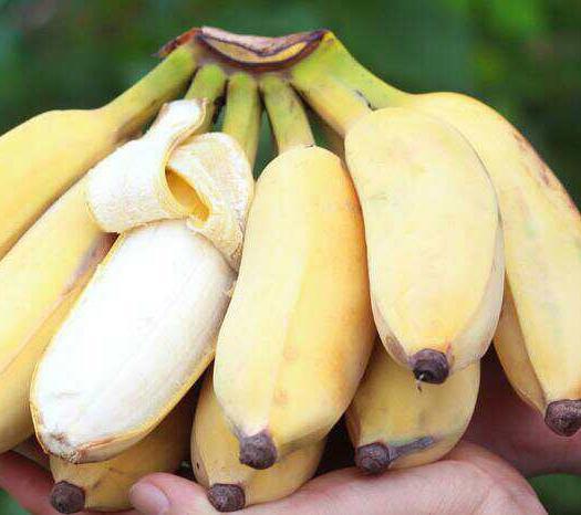 南宁 【一件代发】苹果蕉,粉蕉 芭蕉包邮非小米蕉,香蕉
