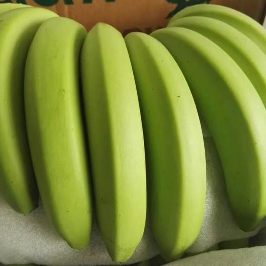 南靖县 天宝香蕉基地 直销  一件代发  有量价格优惠