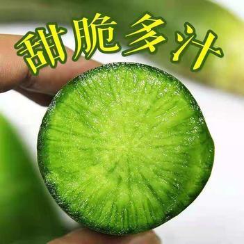 山东潍坊水果萝卜脆甜潍县绿箩卜青箩卜新鲜水果蔬菜5斤包邮