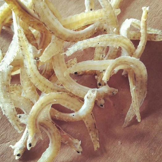 滨州沾化区沙光鱼 丁香鱼罐头食品的优质原料