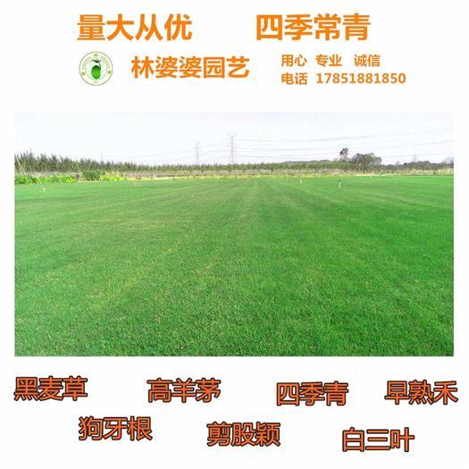 宿迁沭阳县 护坡草种子防止水土流失的新种子包邮