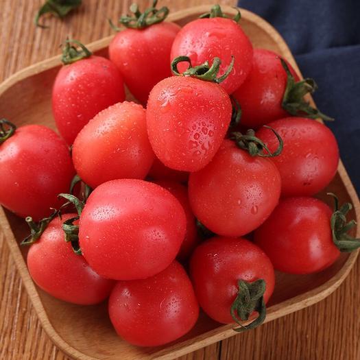 莘縣 千禧5斤圣女果 新鮮小番茄水果支持一件代發