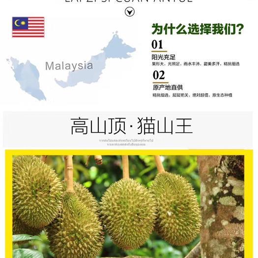 广州天河区 新柜到货马来西亚猫山王榴莲d197,非金枕榴莲,4-9都有