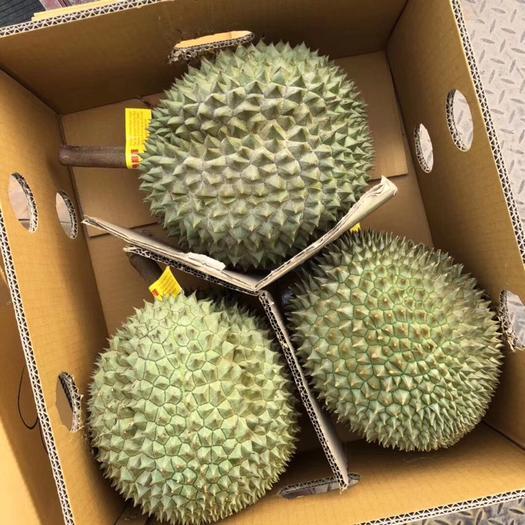 崇左凭祥市 泰国长柄猫/干荛17公斤装优质榴莲,欢迎长期合作客户洽谈。