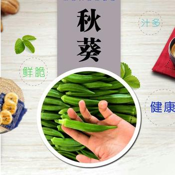 5斤无公害新鲜露天鲜嫩水果黄秋葵蔬菜现摘现发坏老包赔