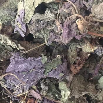 紫苏叶带梗紫全叶