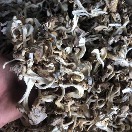 招远市 秀珍菇 凤尾菇 干品