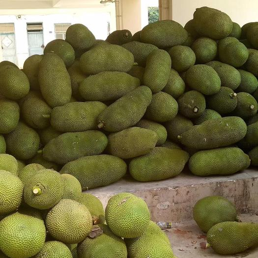 保亭保亭黎族苗族自治縣海南菠蘿蜜 25斤以上的靚果