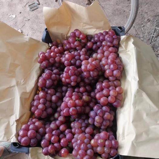 邯郸 红无籽葡萄
