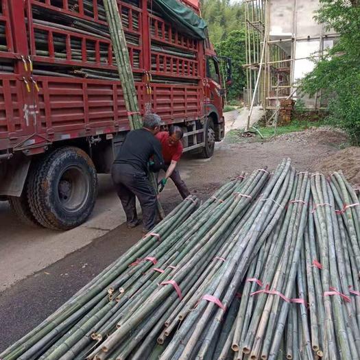 衡陽耒陽市毛竹 香蕉竹4.8米大量供應廣東廣西,歡迎選購
