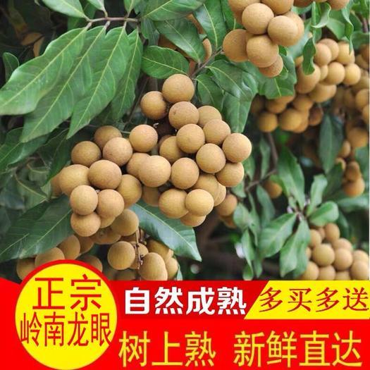 廣州 泰國新鮮桂圓龍眼新鮮石硤水果整箱含箱5斤包售后