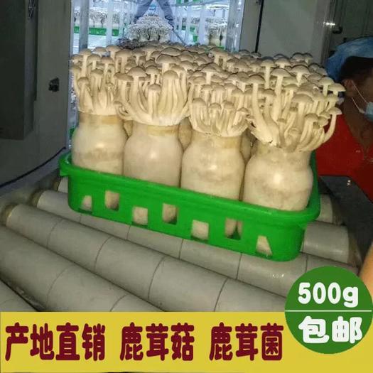 宁德屏南县 鹿茸菇250g鹿茸菌特级干货 无碎煲汤炒菜炖肉食材非500克