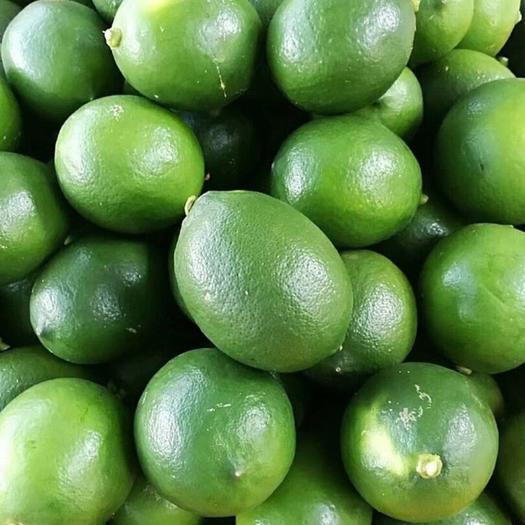 琼海琼海市 青柠檬 海南青柠檬 新鲜青柠檬 现摘现发 物流发货