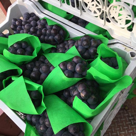 石家庄晋州市京亚葡萄 1-1.5斤 5%以下 1次果