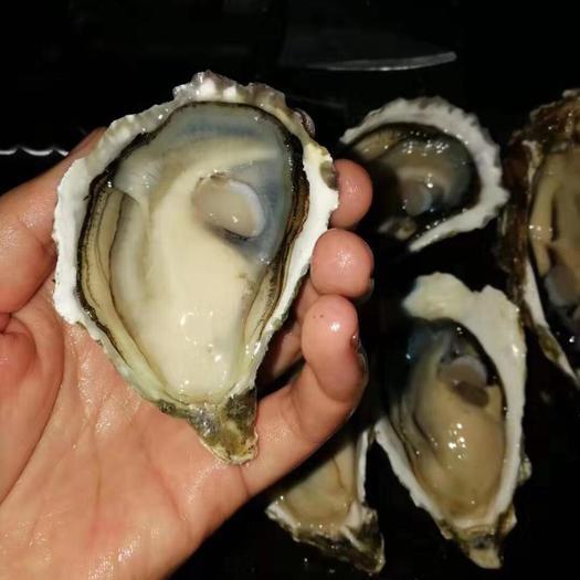 潮州饶平县 新鲜鲜活生蚝牡蛎海蛎子特大肉生鲜海鲜水产包邮烧烤食