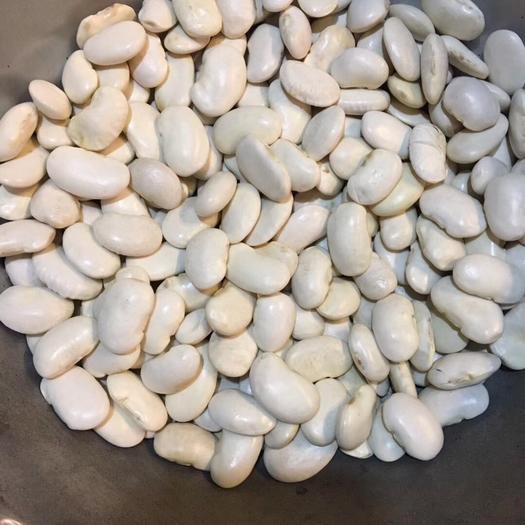 重慶江北 2019新貨精品大白蕓豆