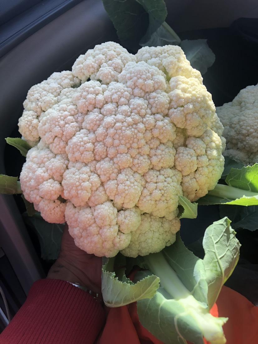 有机花菜 2~3斤 松散