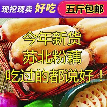 新鲜农家莲藕店有粉藕脆藕苏北特产莲藕清炒白莲藕5斤装嫩藕