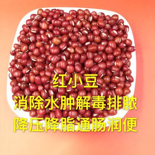 保定安國市 紅小豆500克16元雜糧紅豆薏米非赤小豆新貨農家自產小紅豆