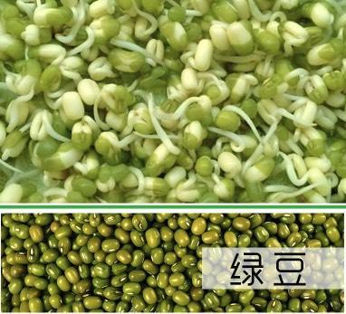 臨沂 小綠豆 綠豆芽苗菜種子專用