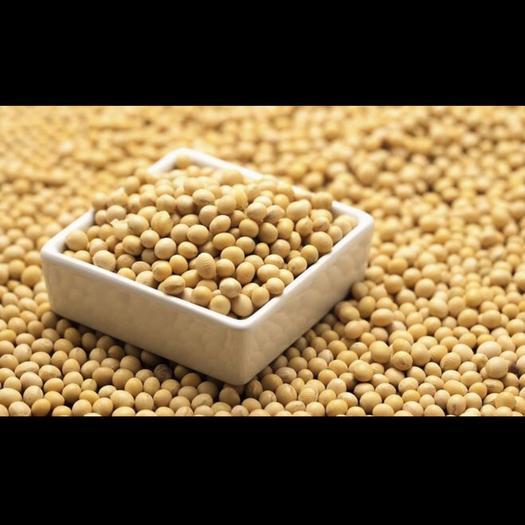 逊克县537黄豆 蛋白商品豆  2019年新豆类