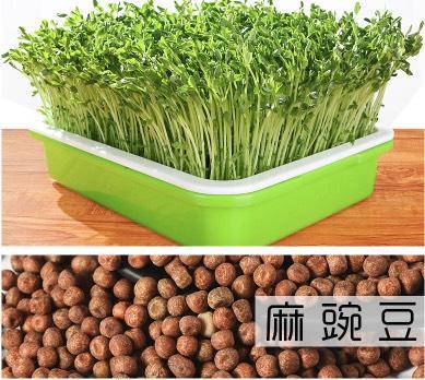 臨沂 麻豌豆種子 生產豌豆苗專用品種