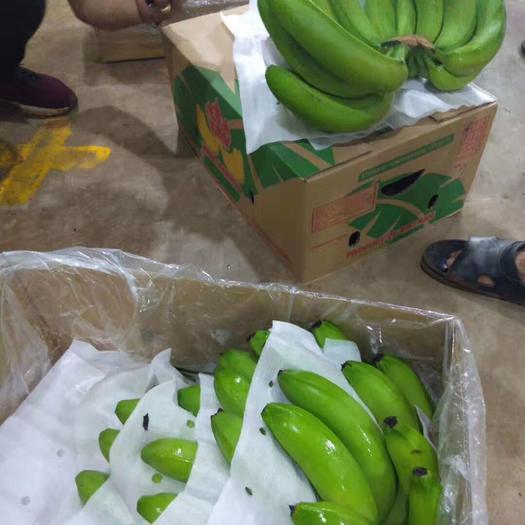 南宁横县老挝香蕉 七成熟