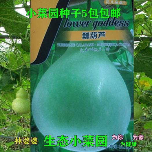 沭阳县 葫芦种子新种子包邮