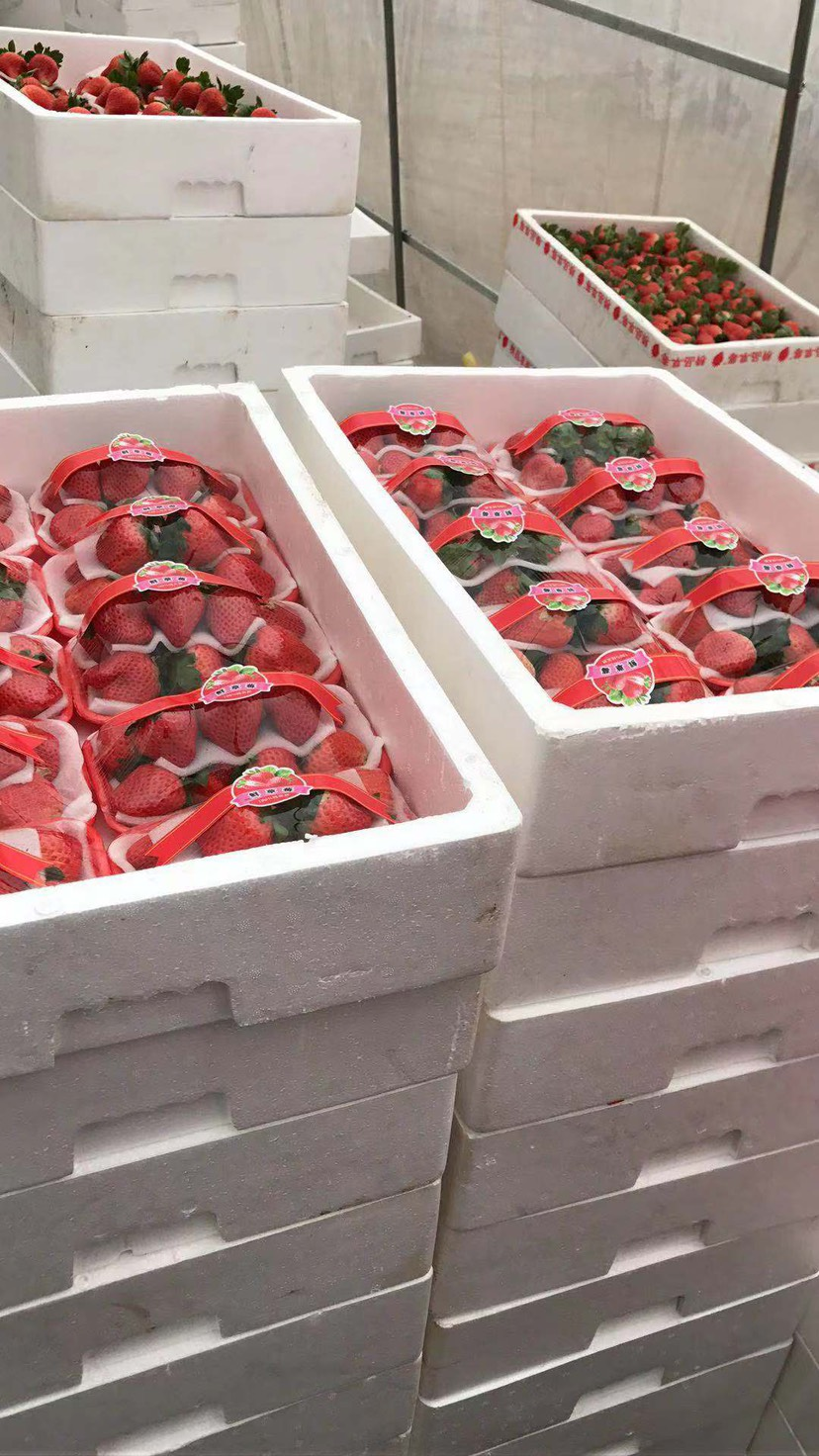 甜查理草莓 代收代購寧峰、寧玉、甜查里……10月底就開始出果子了!需要!