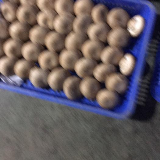 江西省赣州市定南县 有机双孢菇,褐茹