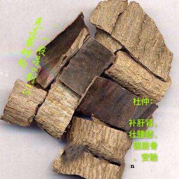 安國市杜仲 中藥材1000克36元包郵絲楝樹皮絲棉