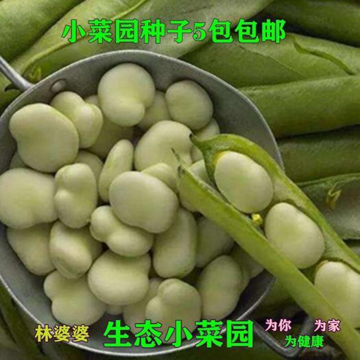沭阳县 蚕豆种子包邮
