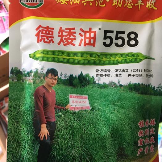 赣州章贡区紫油菜种子 德矮油558.高产油菜种子