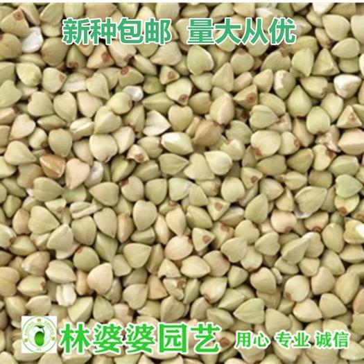 宿迁沭阳县 荞麦种子新种包邮