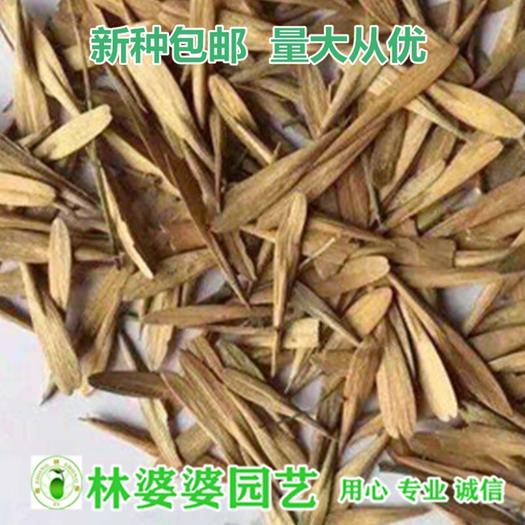 沭阳县白蜡种子 白蜡木种子包邮