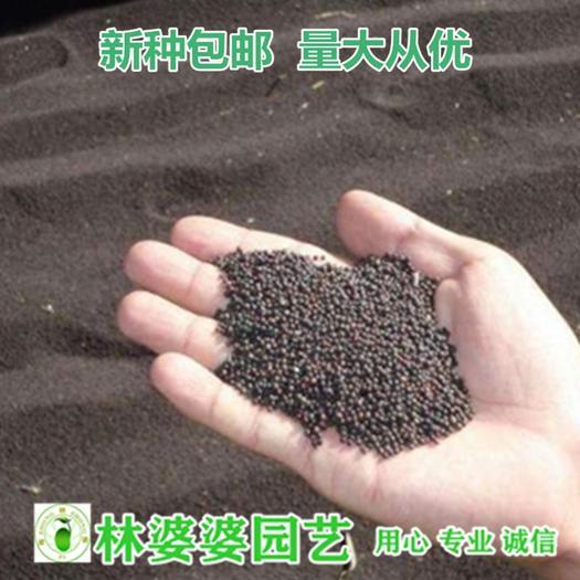 沭陽縣 油菜籽種子包郵