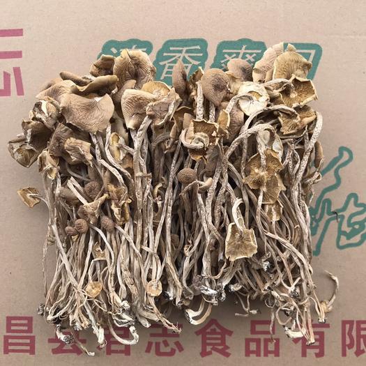 抚州广昌县 君志 广昌3号茶树菇干货批发 新货开伞精品 菇香柄长条形均匀