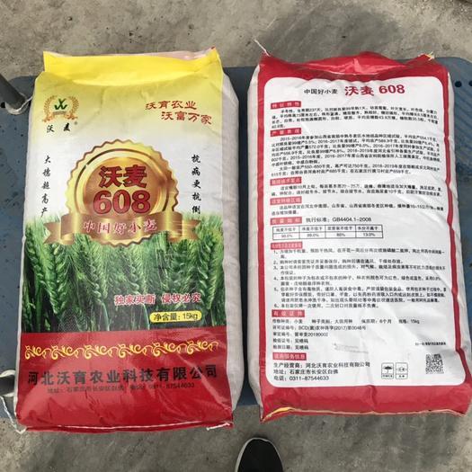 運城永濟市小麥種子 沃麥608 大穗高產 抗病抗倒伏
