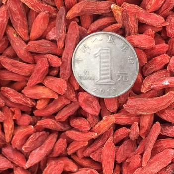 中宁枸杞 19 年的大颗粒26 元一斤