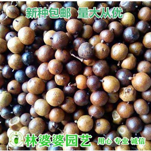 沭阳县 南天竹种子包邮