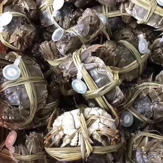 扬州 江苏精品大闸蟹单只零售