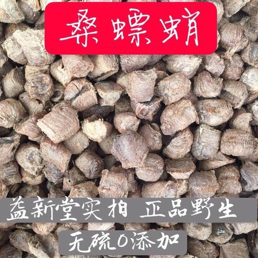 玉林玉州区中国螳螂 桑螵蛸